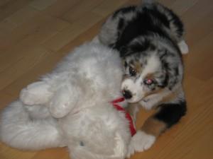 Lilly mit ihrer Stoffmieze